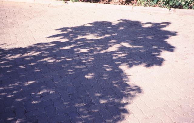 مشاهده سایه درختان